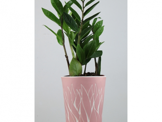 Vase végétal - rose